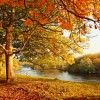 Beautiful afternoon in the autumnal park